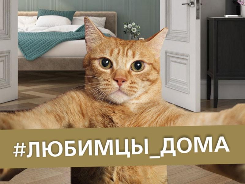 KERAMA MARAZZI Белгород запускает флешмоб #ЛЮБИМЦЫ ДОМА
